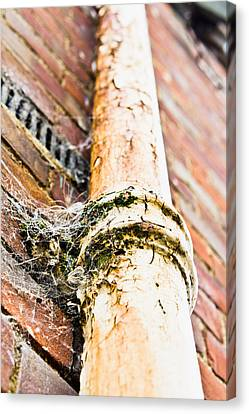 Old Drain Pipe Canvas Print by Tom Gowanlock