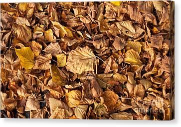 Old Fallen Tilia Leaves Autumn Canvas Print by Arletta Cwalina