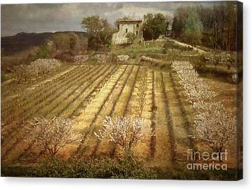 Old Farm House With Almond Trees Canvas Print by Robert Brown