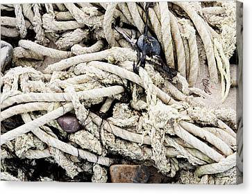 Old Rope Canvas Print by Tom Gowanlock