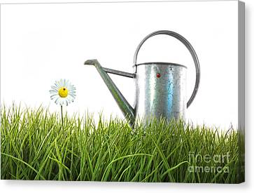 Old Watering Can In Grass With White Canvas Print by Sandra Cunningham
