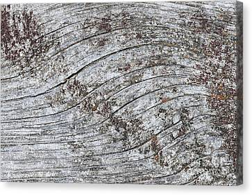 Old Weathered Wood Abstract Canvas Print by Elena Elisseeva
