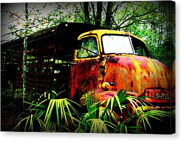 Ole Cow Truck Canvas Print by Dana  Oliver