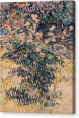 Oleanders, The Hospital Garden At Saint Remy, 1889 Canvas Print by Vincent Van Gogh