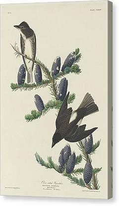 Olive-sided Flycatcher Canvas Print by John James Audubon