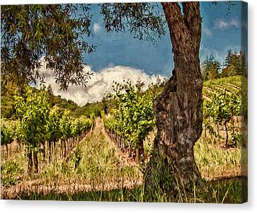 Olive Tree And Vineyard Canvas Print by John K Woodruff