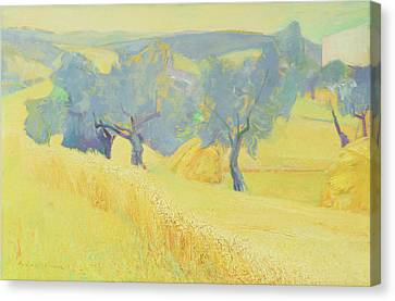 Olive Trees In Tuscany Canvas Print by Antonio Ciccone
