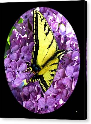 On Bended Wing Canvas Print by Will Borden