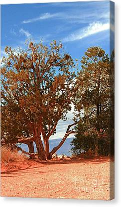 On The Edge Canvas Print by Kathleen Struckle