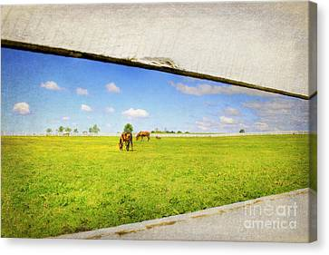 On The Other Side Canvas Print by Darren Fisher