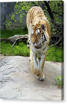 On The Prowl Canvas Print by Gordon Dean II