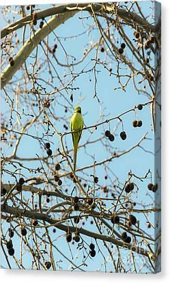 One Bird Canvas Print by Svetlana Sewell