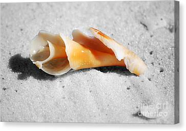 One Orange Spiral Sea Shell Macro Close Crop On Fine Wet Sand Canvas Print by Shawn O'Brien