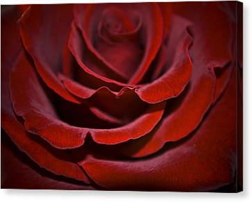 One Red Rose Canvas Print by Svetlana Sewell
