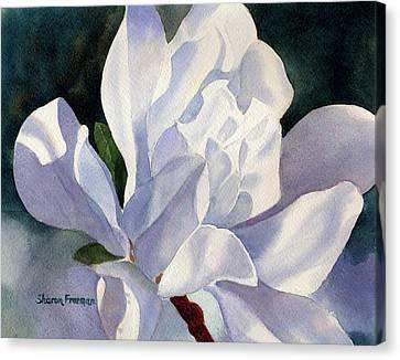 One Star Magnolia Blossom Canvas Print by Sharon Freeman