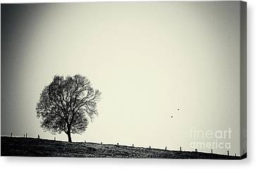 One Tree Canvas Print by Angela Doelling AD DESIGN Photo and PhotoArt