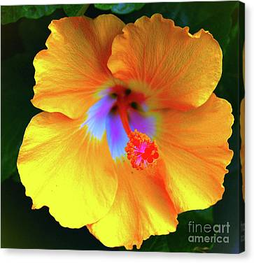One Yellow Flower Canvas Print by Daniel Sanders
