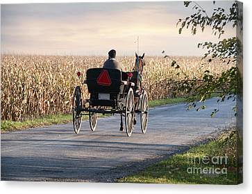 Open Road Open Buggy Canvas Print by David Arment