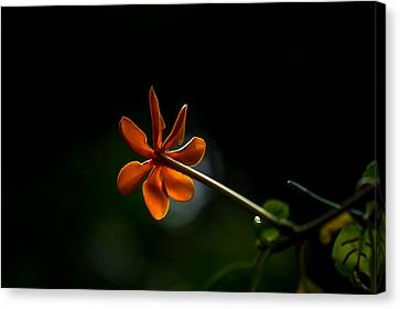 Orange And Black Canvas Print by Ramabhadran Thirupattur