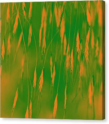 Orange Grass Spikes Canvas Print by Heiko Koehrer-Wagner