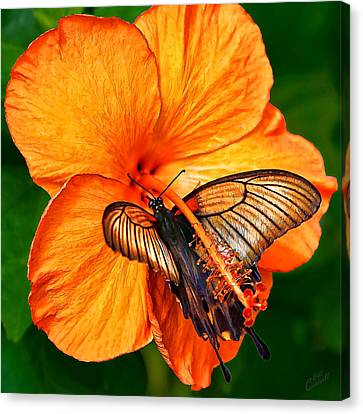 Orange Hibiscus Butterfly 1 Canvas Print by Bill Caldwell -        ABeautifulSky Photography