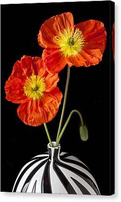 Orange Iceland Poppies Canvas Print by Garry Gay