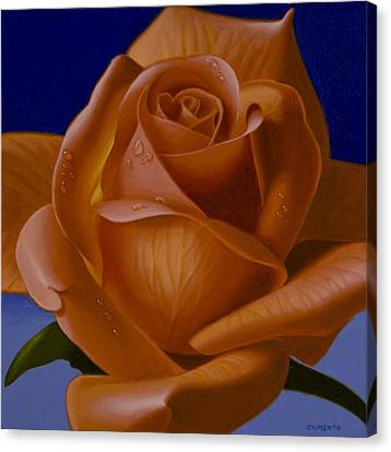 Orange Rose With Blue Background Canvas Print by Tony Chimento