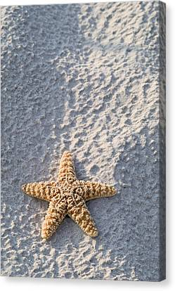 Orange Seastar Laying On Sand Canvas Print by Mary Van de Ven - Printscapes
