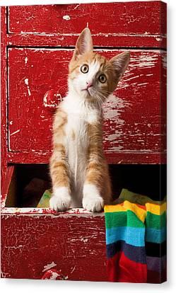 Orange Tabby Kitten In Red Drawer  Canvas Print by Garry Gay