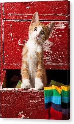 Orange Tabby Kitten In Red Drawer  Canvas Print by Garry Gay