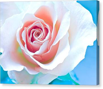 Orange White Blue Abstract Rose Canvas Print by Artecco Fine Art Photography