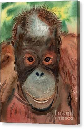 Orangutan Canvas Print by Donald Maier