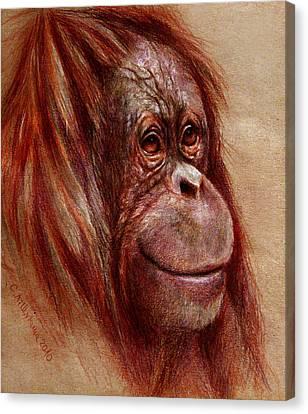 Orangutan Smiling - Sketch  Canvas Print by Svetlana Ledneva-Schukina