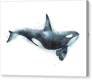 Orca Canvas Print by Amy Hamilton