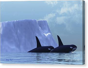 Orca Canvas Print by Corey Ford