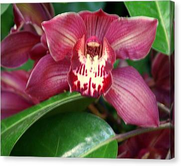Orchid 10 Canvas Print by Marty Koch