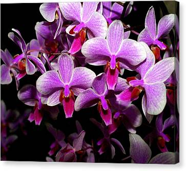 Orchid 12 Canvas Print by Marty Koch