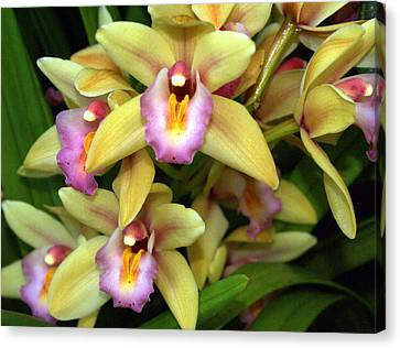 Orchid 7 Canvas Print by Marty Koch