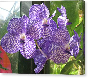 Orchid Canvas Print by Darren Stein