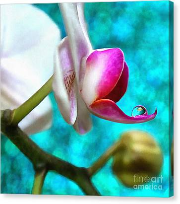 Orchid Delicacy Canvas Print by Krissy Katsimbras