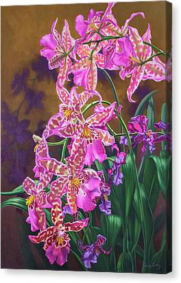 Orchid Fever 3 Miltonia Canvas Print by Fiona Craig