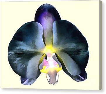 Orchid Of Splendor Canvas Print by Krissy Katsimbras