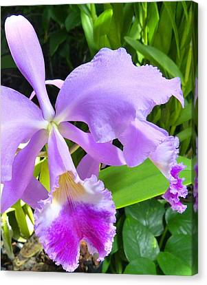 Orchid Ovation Canvas Print by Will Borden