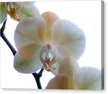 Orchids 3 Canvas Print by Mike McGlothlen