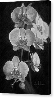 Orchids - Black And White Canvas Print by Lucie Bilodeau