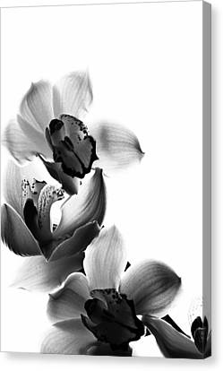 Orchids Canvas Print by Fine Arts