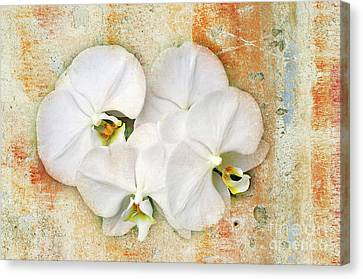 Orchids Upon The Rough Canvas Print by Andee Design