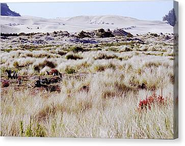 Oregon Dunes 6 Canvas Print by Eike Kistenmacher