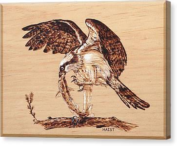 Osprey 3 Canvas Print by Ron Haist