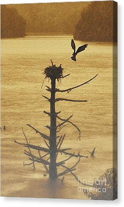 Osprey Flying Up To Nest On Old Dead Tree In Water Canvas Print by Dan Friend